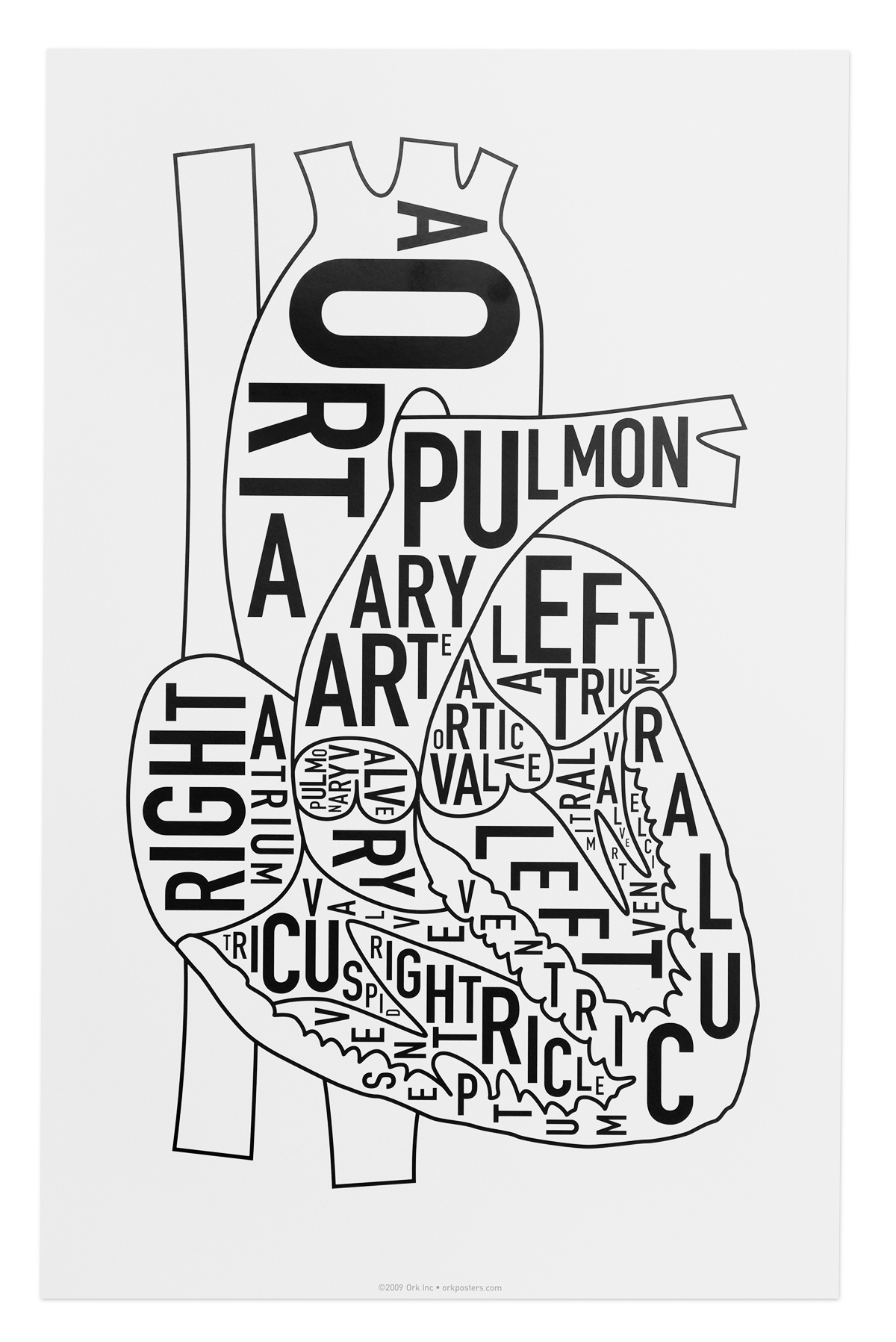 Heart Anatomy Typographic Art Prints - Human Heart Design by Ork Posters