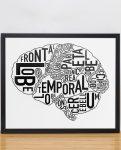 Brain Diagram in Black Frame