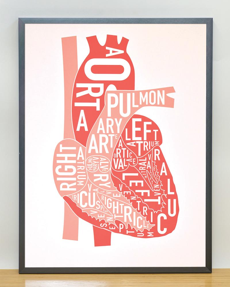 The Heart Anatomy Art 18\