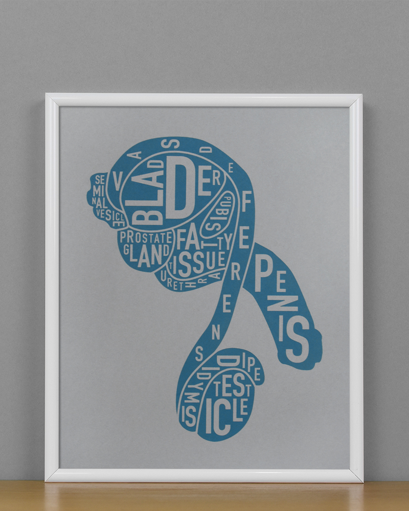 Male Anatomy Diagram, Grey/Teal, in White Metal Frame