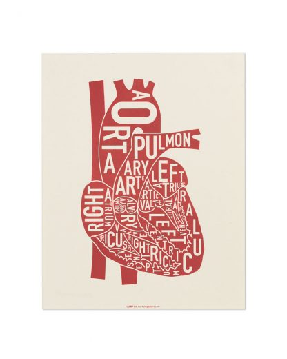 "Heart Anatomy Diagram, Ivory & Red Screenprint, 8"" x 10"""