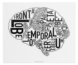 "Brain ""Classic Black & White"" Poster"